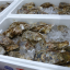 市場便り(2019年7月)岩牡蠣