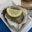 市場便り(2021年7月)岩牡蠣